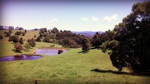 Beautiful pastures of Dorrigo